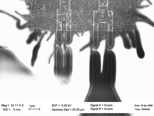 Selective growth of single-walled carbon nanotubes and fabrication of devices on their base